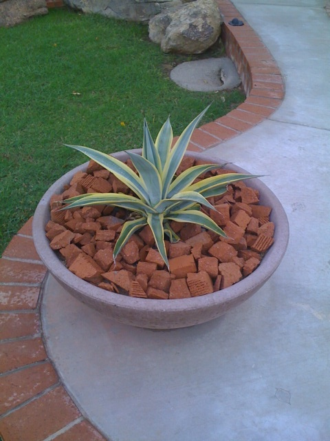 Red Brick Chips in planter